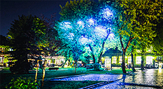 Tree of Life during the Night of Museums 2014